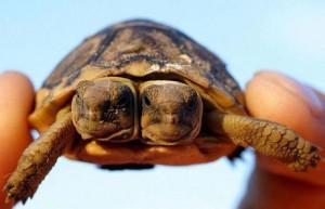 tortugas2cabezas